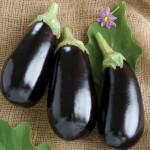 Nadia eggplant from Johnnys Seeds