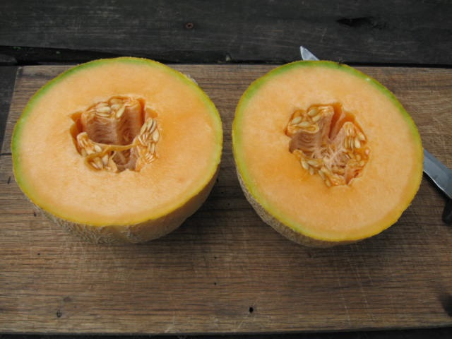Kansas Melon. Photo by Southern Exposure Seed Exchange