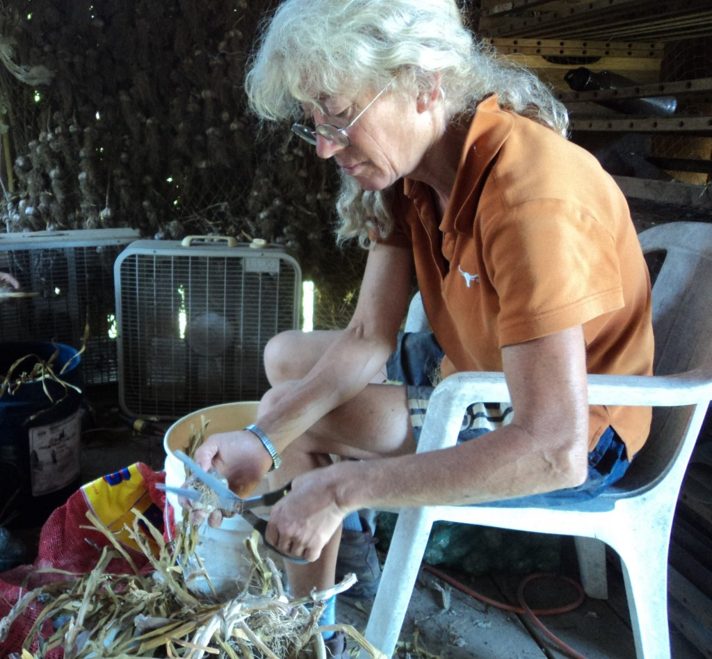 Trimming garlic. Photo Brittany Lewis