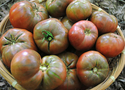 Cherokee Purple tomatoes. Photo Southern Exposure Seed Exchange