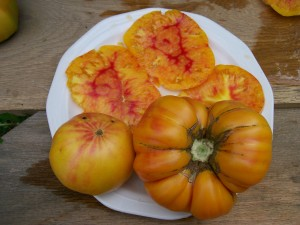 Striped German tomato in all its beauty. Photo Southern Exposure Seed Exchange