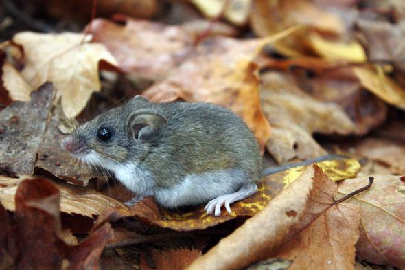 pr_2014_03_mouse