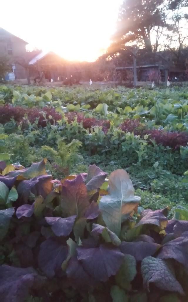 Virginian Eat-All Greens on November 8 Photo by Lori Katz