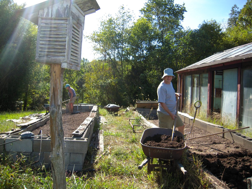 Digging compost into our cold frames in early September. Photo by Wren Vile