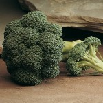 Arcadia broccoli Credit Johnnys Seeds