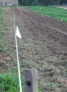 Stakes and ropes set out for planting corn. Photo Kathryn Simmons