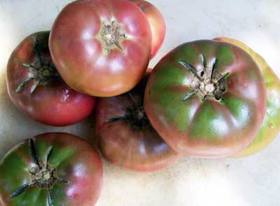 Cherokee Purple tomato. Credit Southern Exposure Seed Exchange