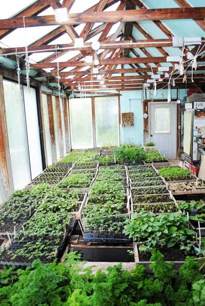 Our greenhouse full of seed flats and sunshine.