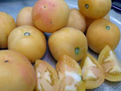 Garden Peach fuzzy tomato. Photo Southern Exposure Seed Exchange
