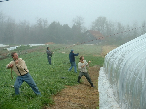 Pulling hoophouse plastic. Photo McCune Porter