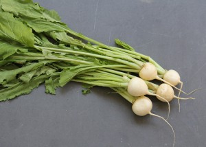 Hakurei turnips Photo Small Farm Central