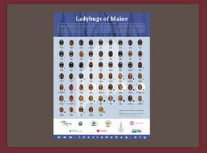 Ladybugs of Maine Poster from the Lost Ladybug Project