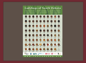 Ladybugs of South Dakota Lost Ladybug Project