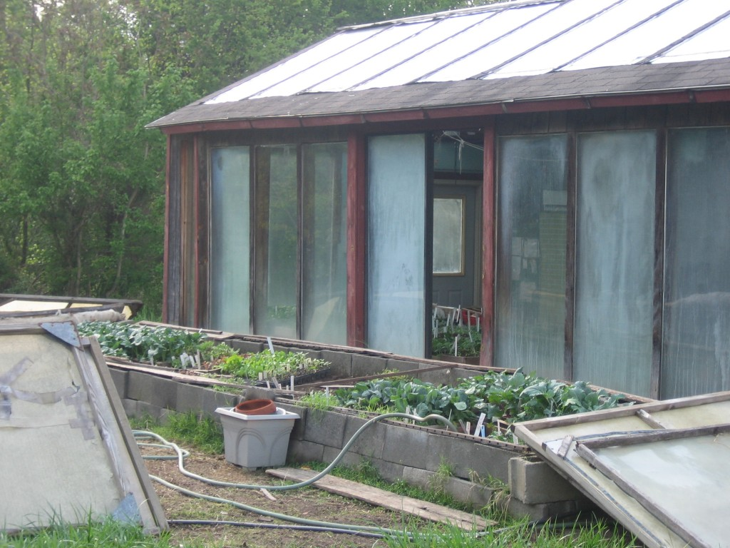 Our greenhouse and cold frames in spring with flats of seedlings. Photo by Kathryn Simmons