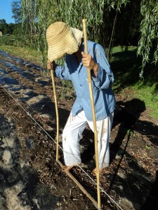 Using the bean dibble to plant through plastic mulch. Photo by Brittany Lewis
