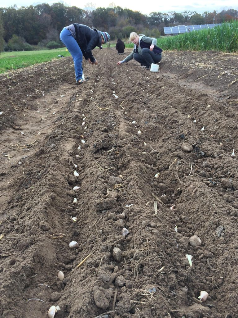 Garlic planting crew. Photo Valerie Renwick