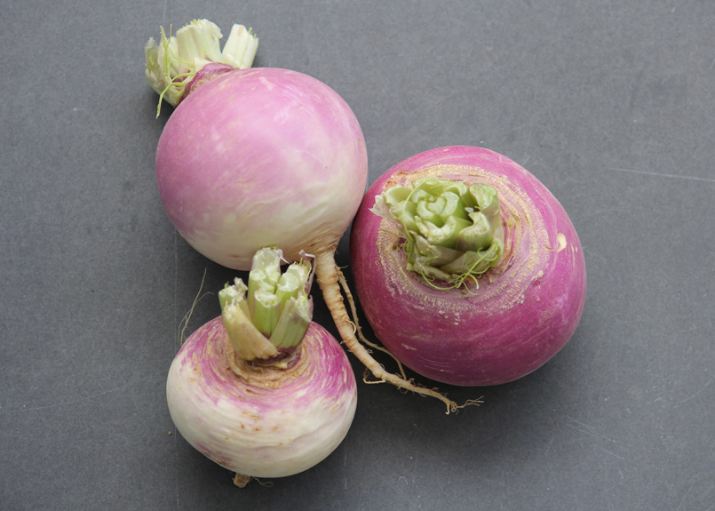 Purple top turnips. Photo Small Farm Central