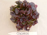 Oscarde letuce Photo Washiington State U Ag Research