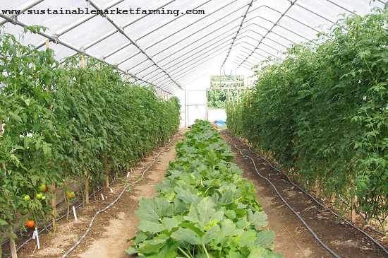 growing for market – Sustainable Market Farming