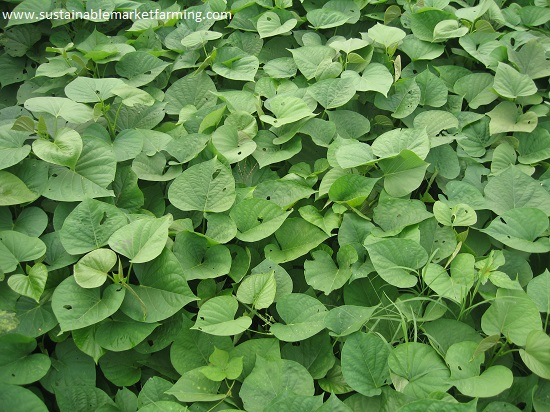 Pests Sustainable Market Farming